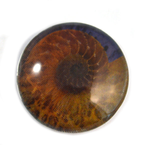 Sea Shell Animated Mermaid Glass Eye