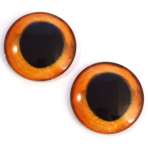 Wide Golden Kitten Glass Animal Eyes
