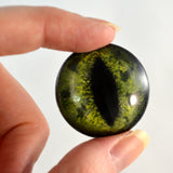 glass alligator eye