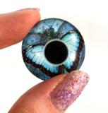 blue butterfly glass eye