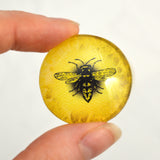 Bright Yellow Honey Bee Eye Cabochon