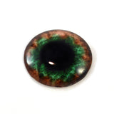 Brown and Green Human Glass Eye