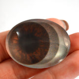 Animated Brown Oval Doll Glass Eyes