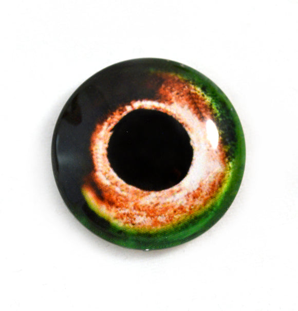 Green and Orange Fish Glass Eye