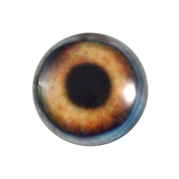 brown dog glass eye