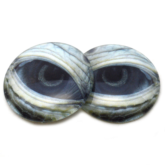 Green Sea Turtle Glass Eyes