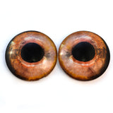 Wild Fish Glass Eyes