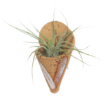 Ceramic Planter Magnet with Air Plant
