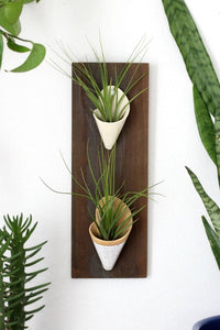 *Limited Edition* Double Wall Planter