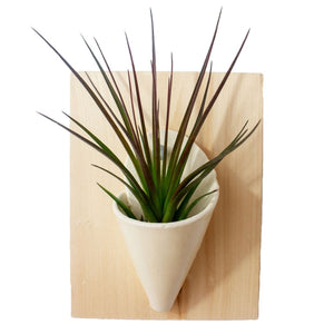 Medium Wall Planter