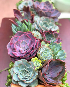 6/8 DIY Succulent Centerpiece Planter Box at Myrtle Creek Gardens