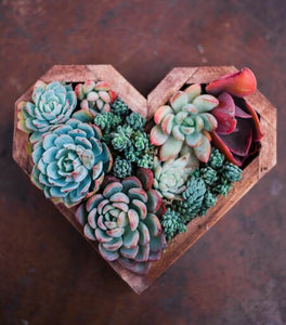 Wooden Succulent Heart DIY Kit