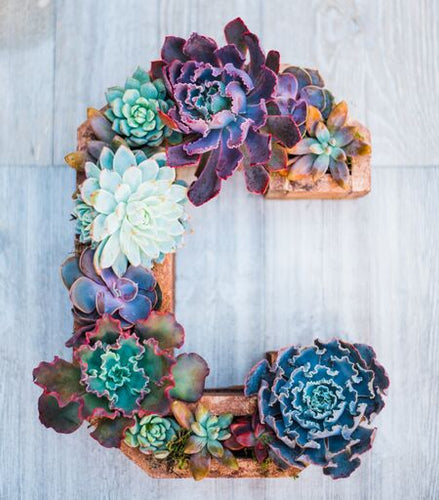 Wooden Succulent Letters (Brown)
