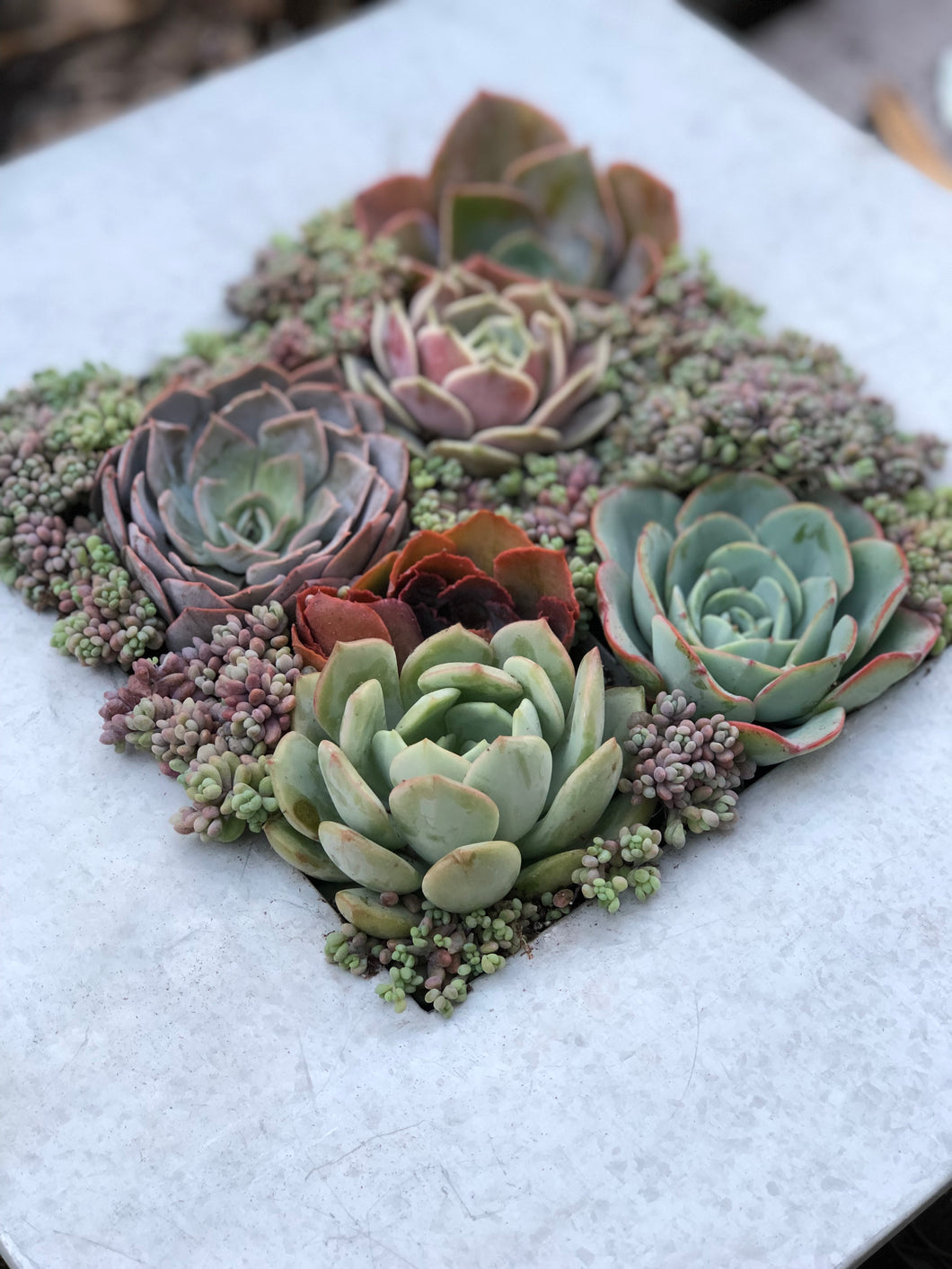 DIY Succulent Wall Kit