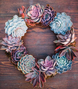 Succulent Wreath (14in Round)