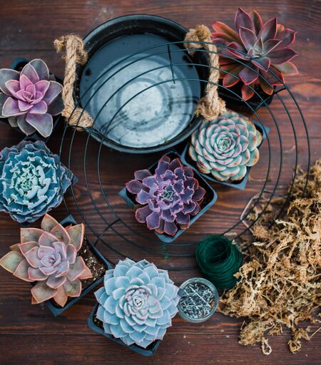 Succulent Wreath (Wired) DIY Kit