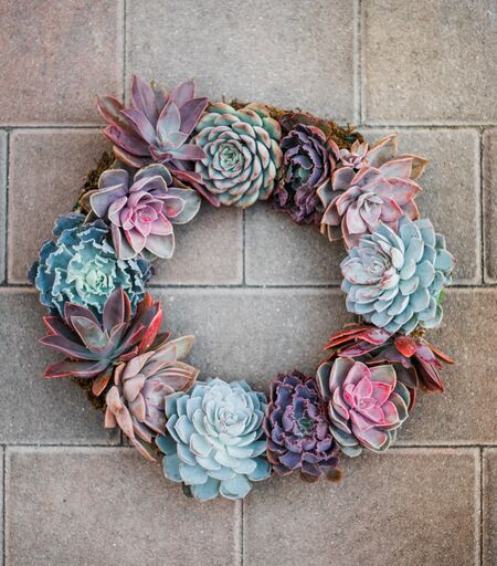 Diy Succulent Wreath 14in Wired Kit