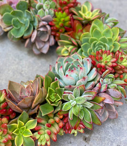 DIY Succulent Heart Wreath Kit (12in Wreath)