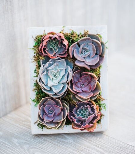Succulent Frame DIY Kit (5x7in)