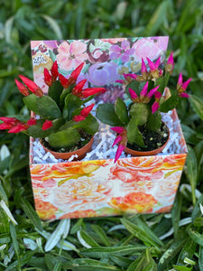 Easter Cactus GiftBox
