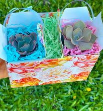 Duo of Mini Succulents Gift Box