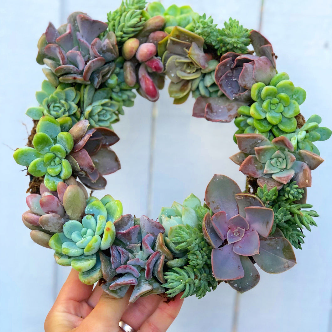 Diy 8in Succulent Wreath Kit In Succulent Love