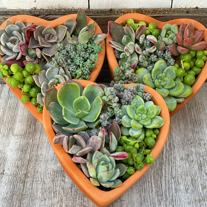 DIY Kit: Trio of Succulent Heart Pots