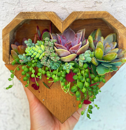 Hanging Heart Planter DIY Kit
