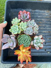 DIY Colorful Planter Kit