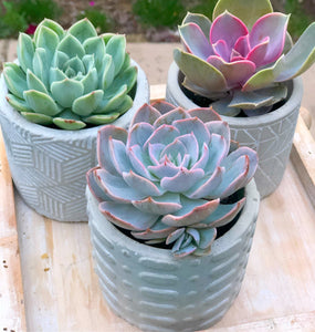 Mini Planter DIY Kit: Makes 3 Pots!