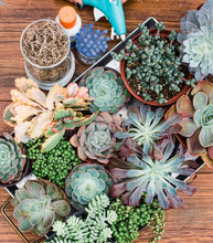 DIY Succulent Pumpkin Centerpiece Kit