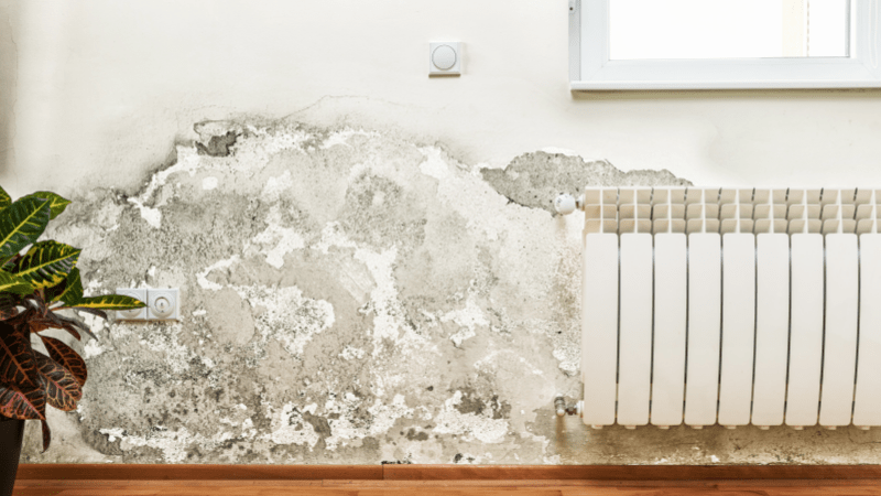How to find and get rid of mold naturally and effectively?