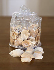 2 x Bags of Sea Shells Beach Home Decor Vase Filler Assorted Colours Seaside #1