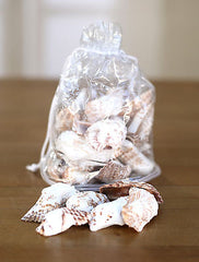 Sea Shells Beach Home Decor Vase Filler Assorted Colours Seaside #8 BRAND NEW
