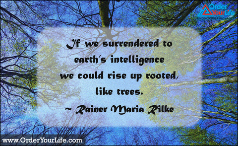 If we surrendered to earth's intelligence we could rise up rooted, like trees. ~ Rainer Maria Rilke
