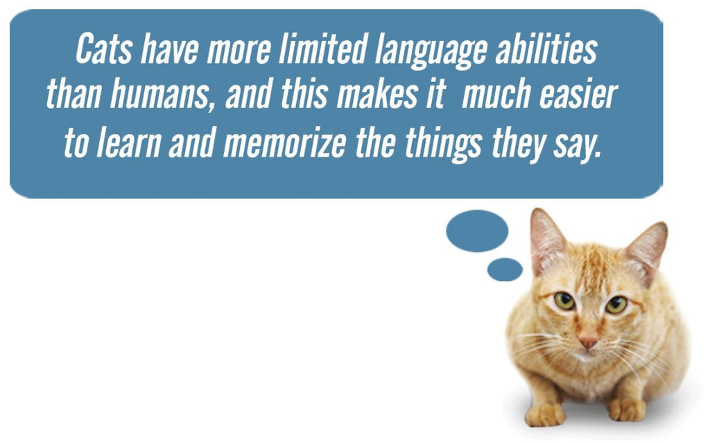 The Japanese researchers found that cats understand  humans.