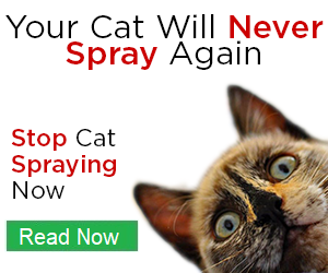 cat spray stop