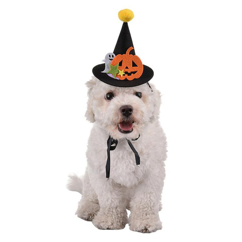 FREE Halloween Pet Hat and Hairpin Pumpkin. Dog Accessories GreatmyPet