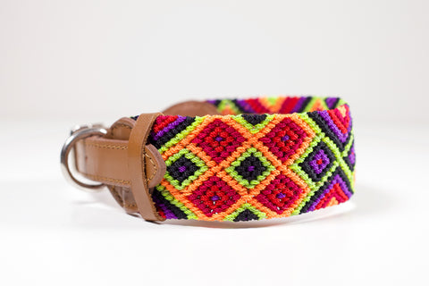 Colourful dog collar - Medium bcb7