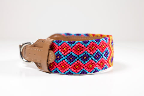 Colourful dog collar - Medium dpb8