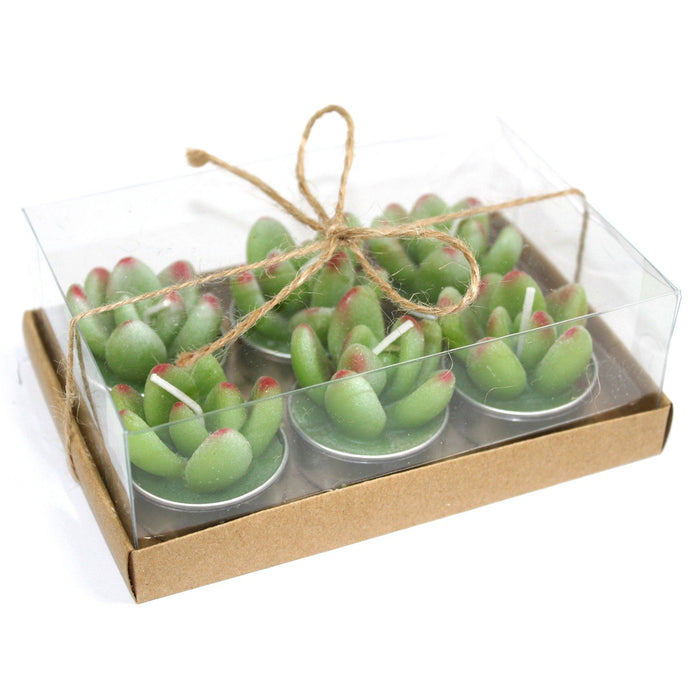 Set of 6 Succulent Cactus Tealights in Gift Box