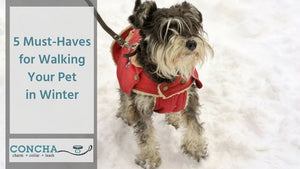 Five Must-Haves for Walking Your Pet in Winter