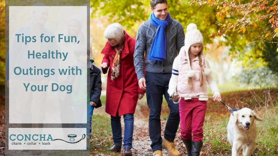 Tips for Fun, Healthy Outings with Your Dog