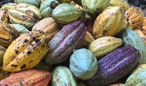 cacao pods - craft chocolate