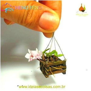 100 Pcs ready to germinate seeds Mini Bonsai Orchid ready to germinate seeds Indoor Home Miniature Flower Pot Garden Plants Four