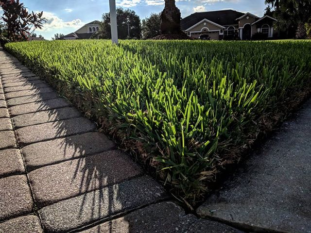 When Should You Start Fertilizing This Spring?