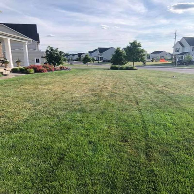 Before and After - A Tail Of A Stressed Lawn