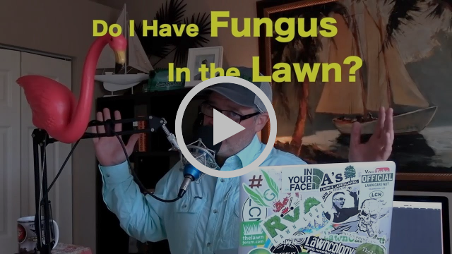 Lawn Brown Spots: Do I Have Fungus or Insects? How To Identify Insects and Disease