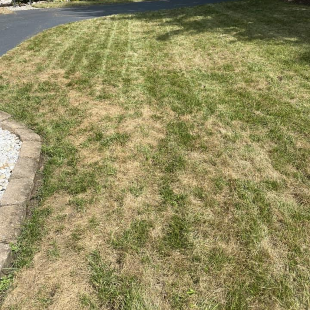Brown Spots In The Lawn In Summer