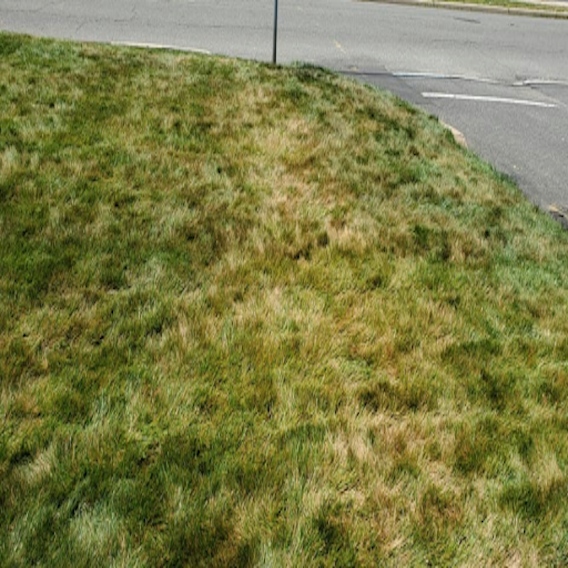 Helping your lawn when temps are over 85°